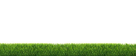 Green Grass Border Isolated White Background