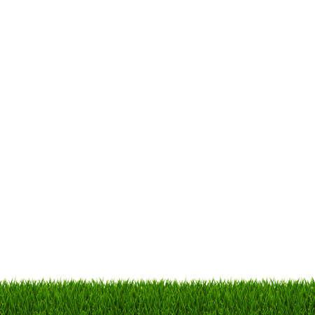 Green Grass Frame White Background