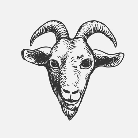 Goat Face, hand drawn doodle style scribble, isolated vector illustration icon on a white background