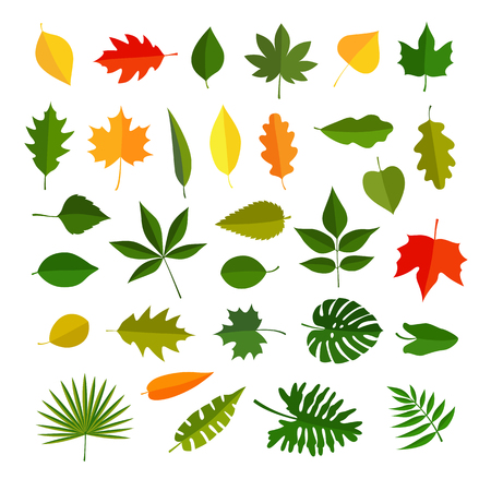 leaves of different plants, vector graphic icons set illustrations, isolated on white background Illustration