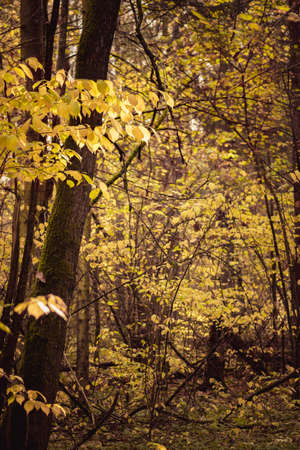 Almost barren trees in deep forest dark moody atmosphere Imagens