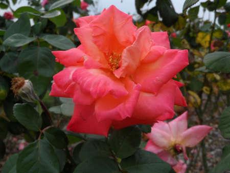 flower Imagens - 19824751