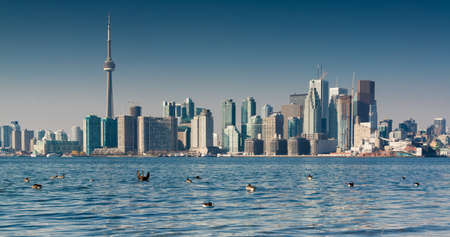 City skyline with geese on the lake Stock Photo - 17001140