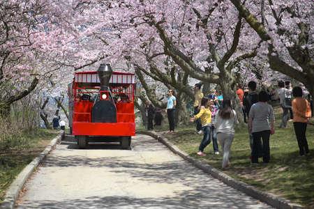 high park: TORONTO - 3 maggio: Peoplel godere dei fiori di ciliegio a High Park a Toronto, in Canada il 03 maggio 2013. Editoriali