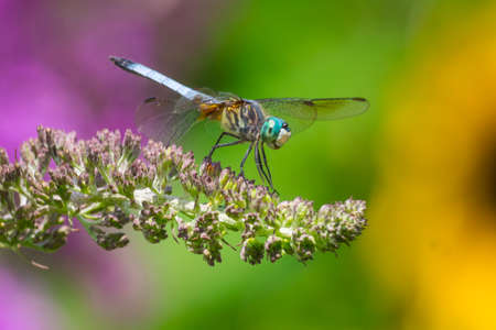 A dragonfly with colorful background photo