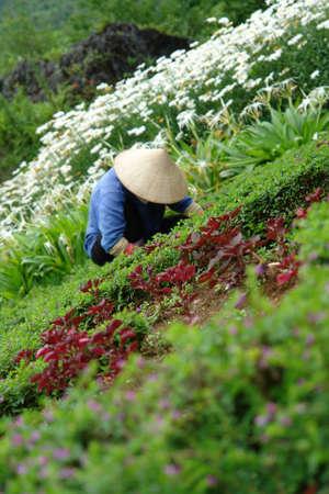 Working in the flower garden