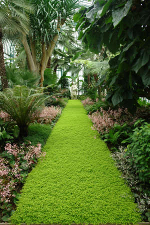 Tropical garden Stock Photo - 800884