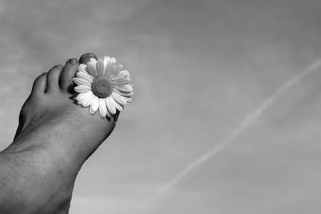 Summer feeling concept displaying a foot with a daisy between the toes Stock Photo - 910195