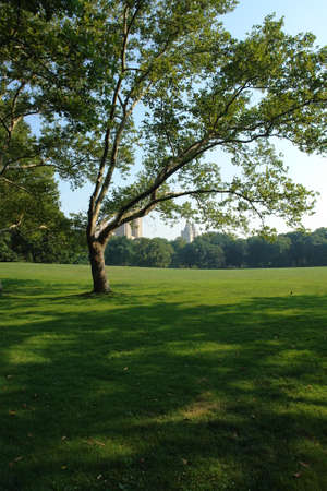 central park in new york on a warm summers day photo