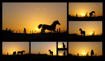 Horse silhouettes at sunset, collage of different horse poses