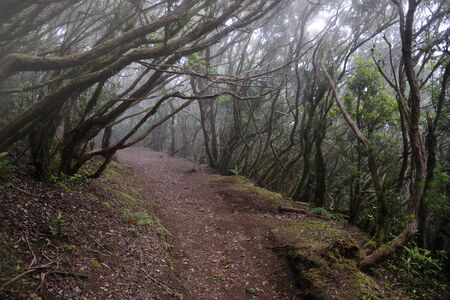 laurel mountain: Anaga rural park in tenerife canary islands