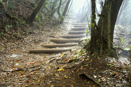 The laurisilva forest, road with fog in autumn. Tenerife. (Canary Islands) Stock Photo - 13880222