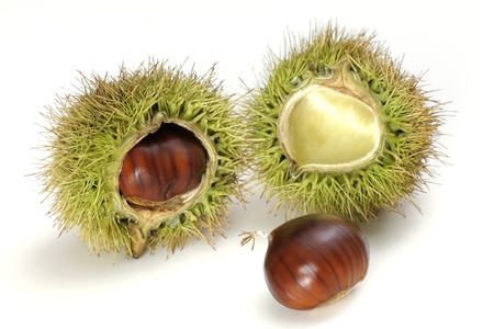 Edible ripe chestnuts on the white background Stock Photo