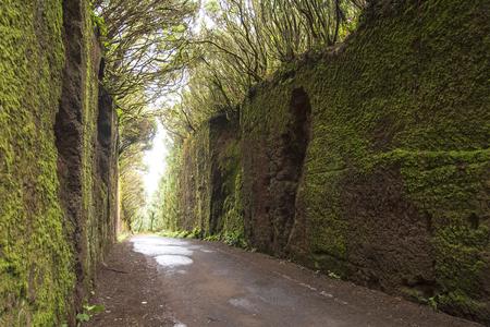 Rural Park Anaga, Tenerife. Laurel forest.