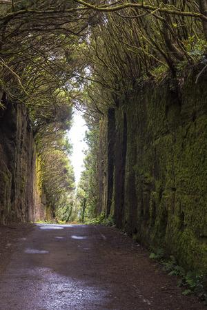 sylvan: Rural Park Anaga, Tenerife. Laurel forest.