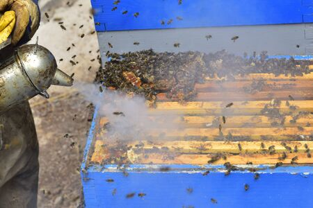 Beekeeper working on a beehive with smoker.