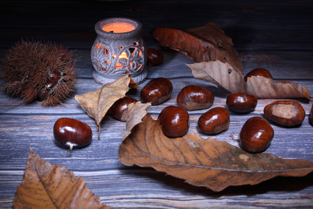 Chestnuts in full harvest, winter fruits Stock Photo