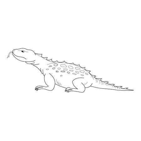 Lizard vector. Hand drawn picture of lizard. Black thin line illustration, isolated on white Stockfoto - 131012240