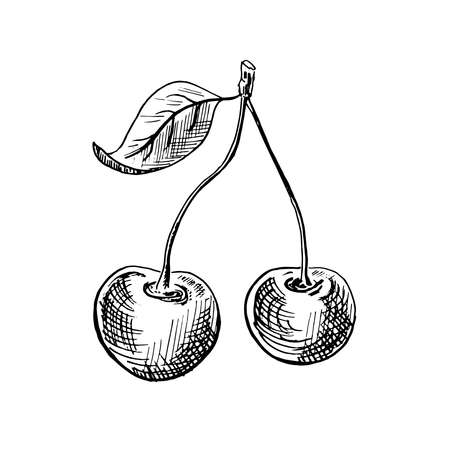 Cherry sketch. Hand-drawn black two cherry berries with a leaf, isolated on white background. Sketch style vector illustration.