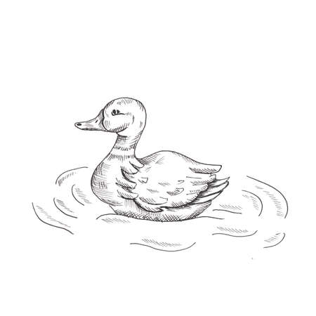 Duck. Hand drawn sketch style duck in the water. Isolated on white background. Foto de archivo - 131059524