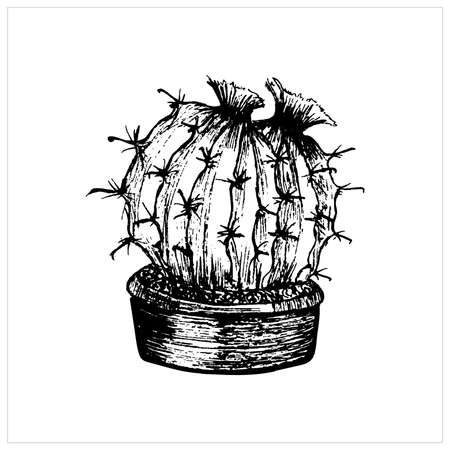 Cactus sketch. Hand drawn small round cactus in a pot. Vector illustration, black on white background Vektorové ilustrace