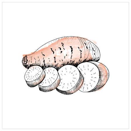 Sweet potato sketch. Hand drawn sketch style black yam on white background. Vector illustration. Illustration
