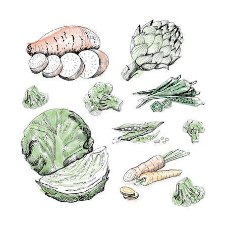 Set of vegetables. Collection of hand drawn vegetables on white background Imagens