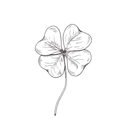 Clover sketch. Hand drawn four leaf clover. Sketch style illustration, isolated on white. Reklamní fotografie