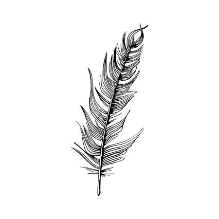 Feather. Hand-drawn sketch of a bird feather. Black and white vector illustration isolated on white background.