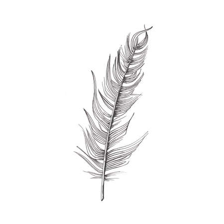 Feather. Hand-drawn sketch of a bird feather. Black and white illustration isolated on white background.