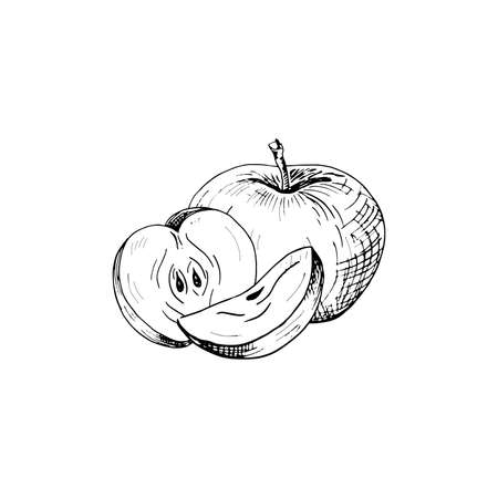 Apple sketch. Hand drawn apple. Vector illustration, isolated on white