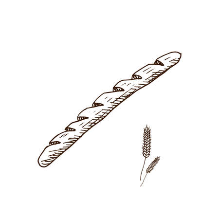Baguette. Hand drawn loaf of bread. Sketch style vector illustration. Isolated on white