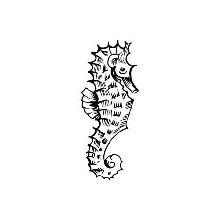 Sea horse sketch. Hand-drawn vector illustration. Isolated on white.