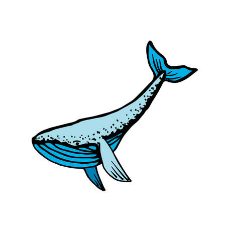 Whale. Hand-drawn vector illustration. Isolated on white. 向量圖像