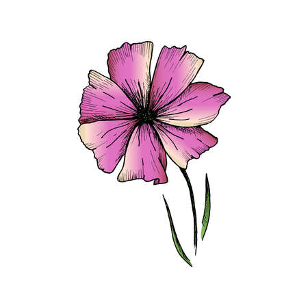 Flower sketch. Hand-drawn pink flower isolated on white background. Vector illustration