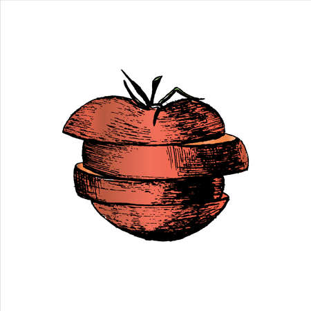 A tomato. Sliced red tomato. Hand-drawn in sketch style. Isolated on a white. Vector illustration.