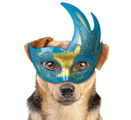 Dog wearing carnival mask isolated 写真素材