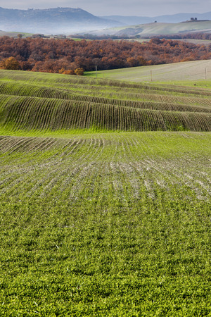 rolling landscapes: Tuscany Hills in autumn