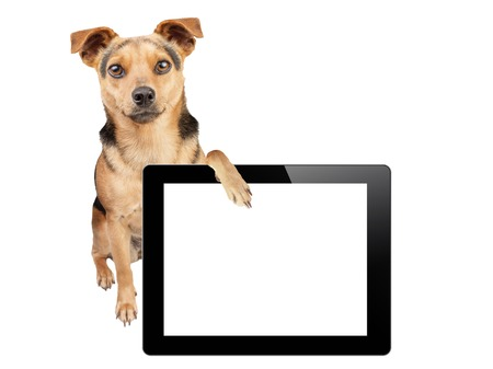 whitespace: Dog with paw on tablet with blank screen isolated Stock Photo