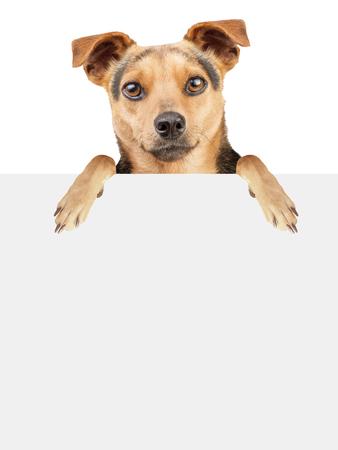 whitespace: Dog behind blank banner isolated Stock Photo