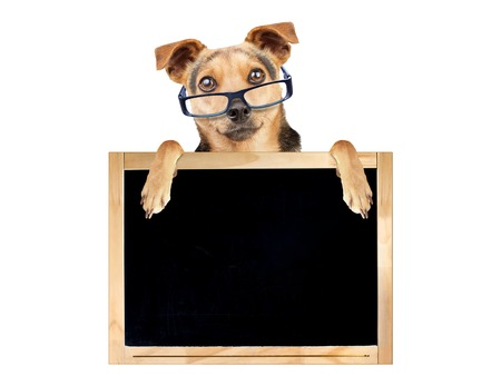 Funny dog wearing glasses behind blank blackboard isolated