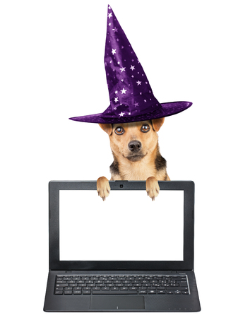 Funny Halloween dog wearing witch hat with paws on computer laptop or notebook with blank screen isolated