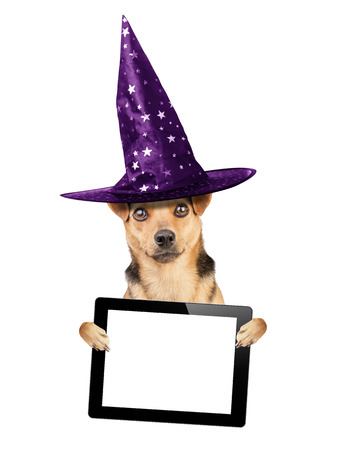 publicize: Funny Halloween dog wearing witch hat holding tablet pic with blank screen isolated