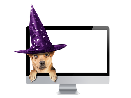 publicize: Funny Halloween dog peeping inside monitor pc wearing witch hat isolated Stock Photo