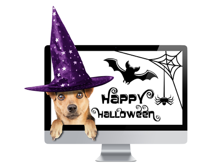 Funny Halloween dog peeping inside monitor pc with celebration theme wearing witch hat isolated Stock Photo