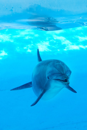 Dolphin unter Wasser zu suchen und posieren für Foto