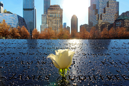 New York City Ground Zero White rose closeup Editorial