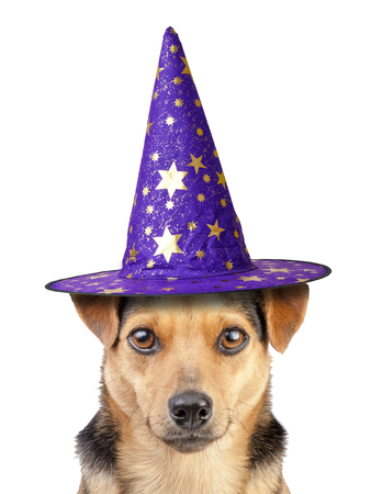 Funny Halloween dog witch or wizard hat isolated