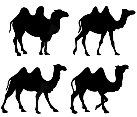 Silhouette of four walking camels isolated on white Фото со стока - 115158038