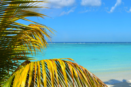 Palms at tropical sea
